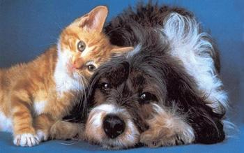 Glucosemeter kat en hond