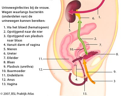 urineweginfectie